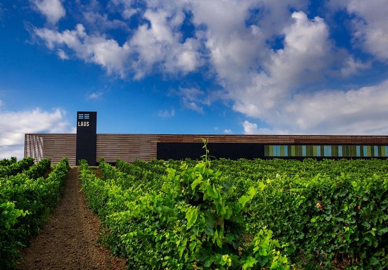 Un año más una de las Rutas del Vino más visitadas de España