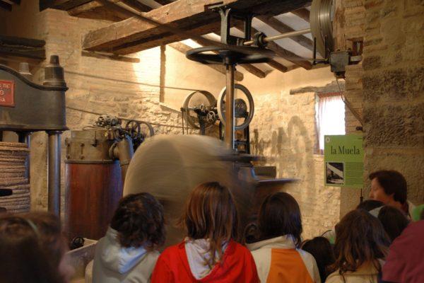 establec_museos_aceite_05