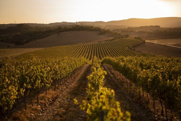 ruta-vino-somontano_gilbert-bages29