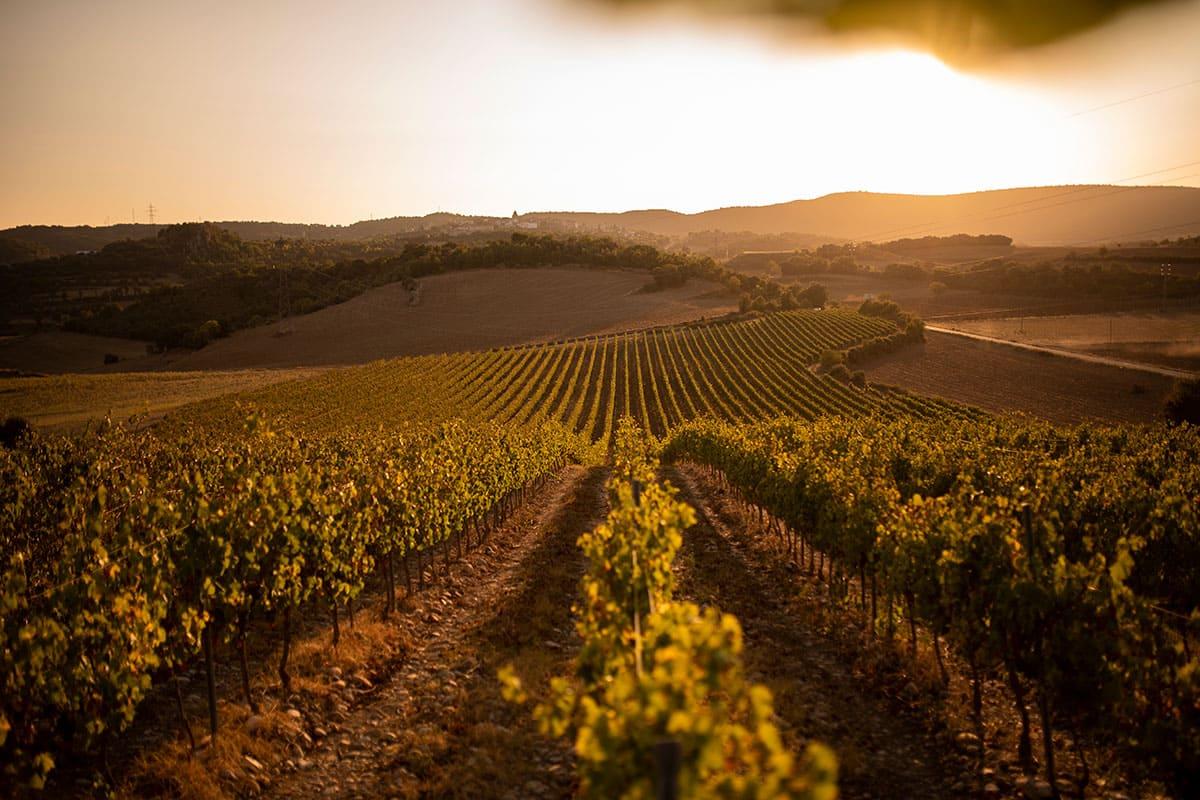 Cata con vistas con Viñas del Vero